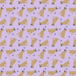 Tiny Belgian Malinois - purple