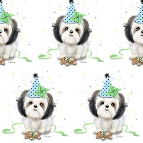 Shih tzu birthday boy M