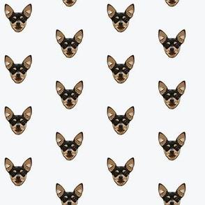 Chihuahua Heads