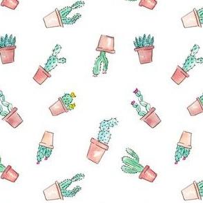 Cactus Succulent Garden Toss