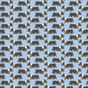 Trotting tri Pemmies - small blue