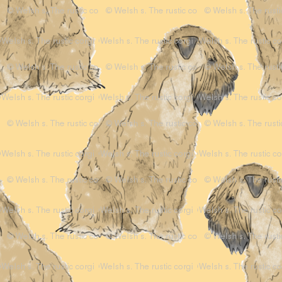 Sitting Wheaten Terriers - small gold