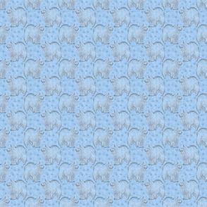 Posing American Eskimo dog - small blue