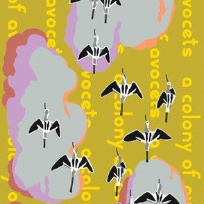 TEA_WORD_colony_avocets_2