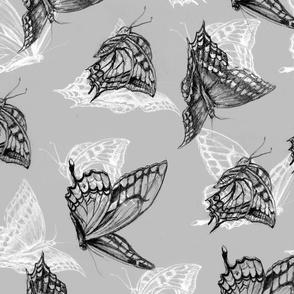 butterfly_grey