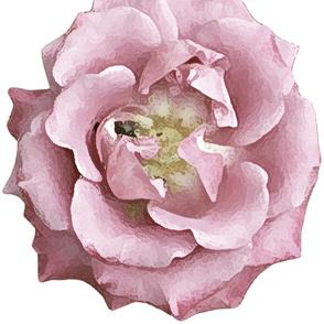 Pink Rose for half drop wallpaper