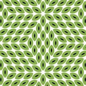 06014697 : R6lens 4o : kiwi