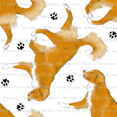 Trotting Nova Scotia duck tolling Retriever and paw prints - tiny white
