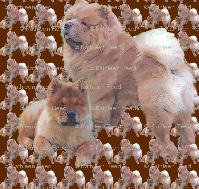 chow_chows