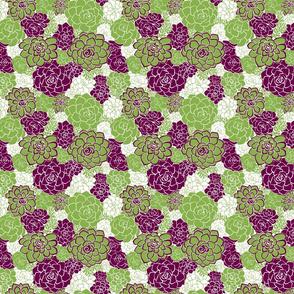 SucculentGreenery