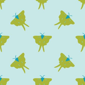 Luna Moth on light bluegreen
