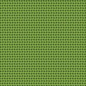 Black Snail on Ferny Green