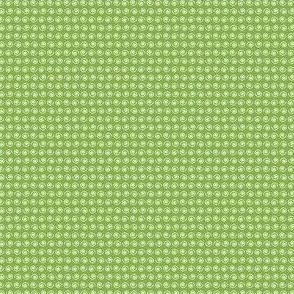White Snail on Ferny Green