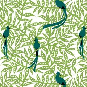 quetzales  [ greenery]