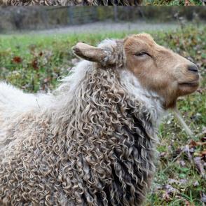 yarn on the hoof