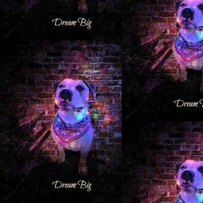 pitbull Dream big-ed