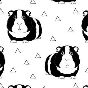 black and white guinea pigs