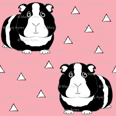 black and white guinea pigs on pink