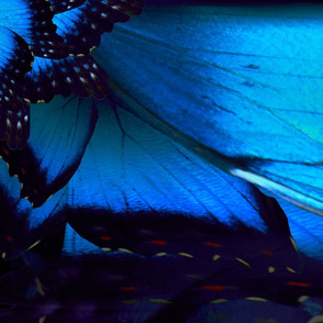Butterfly_Wing_Fab_Pattern
