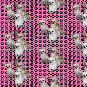 chihuahuas_on_pink