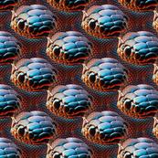 snake heads