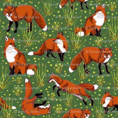 red_fox_and_dandelions