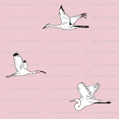 Bird Watching - Pink