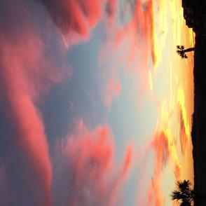 Pink Sky Palm Cove