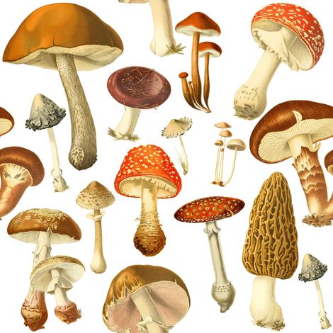 vintage botanical fungus  fabric by redbriarstudio on Spoonflower - custom fabric
