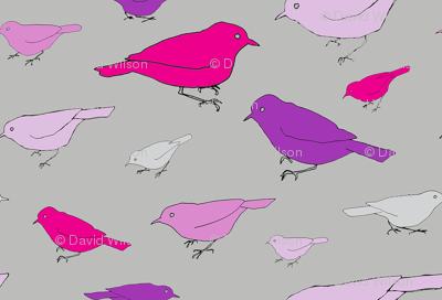 small purple birds