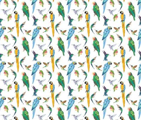 Rtropical-birds_shop_preview