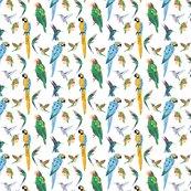Rtropical-birds_shop_thumb
