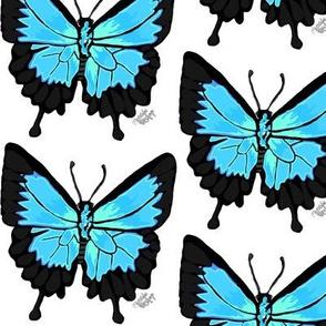 Ulysess Butterfly