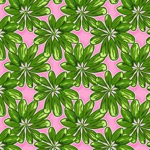 Schefflera on Pink