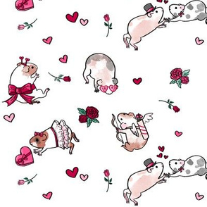 Valentine's Day Guinea Pigs