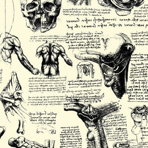 Da vinci's Anatomy Sketchbook // Parchment // Small