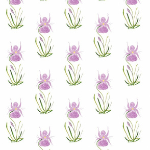 My_Orchid_2_cyclam