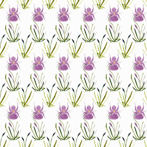 Orchids_combined
