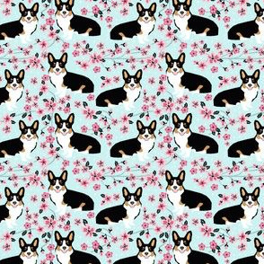 Corgi tri colored cherry blossom light blue