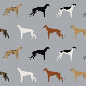 Greyhounds pattern grey multi colored coats