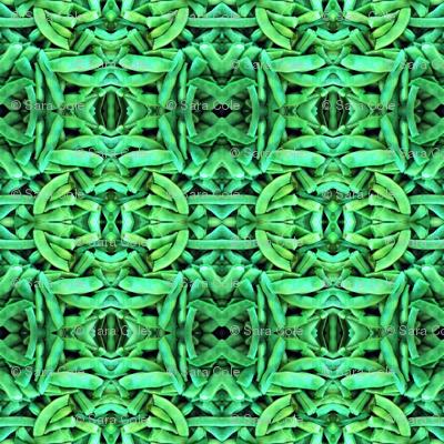 Green Bean Kaleidoscope