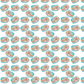 paua-fish