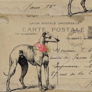 Whippet / Greyhound Carte Postale