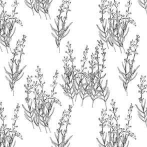 Hand-drawn flowers of lavender