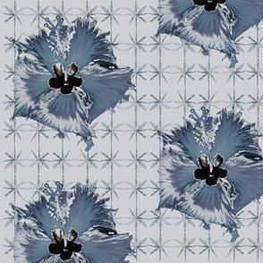 Blue western hibiscus