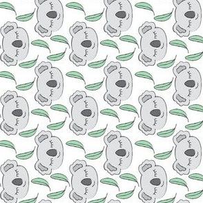 grey koalas and eucalyptus