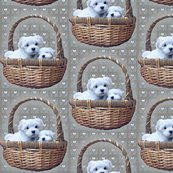 Rmaltese_in_basket_shop_thumb
