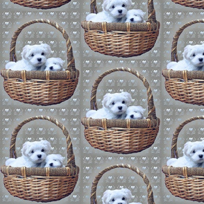 maltese_in_basket