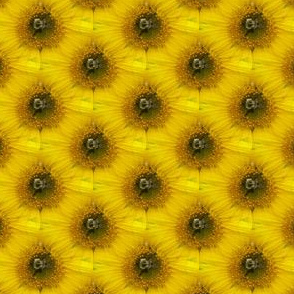 Bee There Now