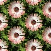 Rconeflower172_shop_thumb